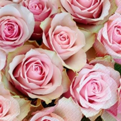 f746c09b Vakker kaffe serviett, Rosa roser. - Nettbutikken Sonte